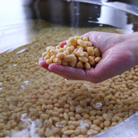 佐賀県産国産高級一等大豆に霧島裂罅水をたっぷり吸わせます。